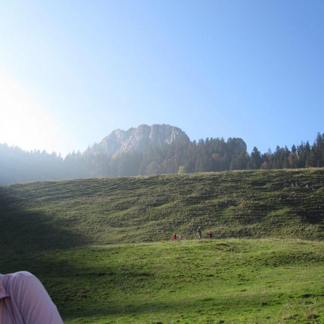 Daffnerwaldalmen (2)